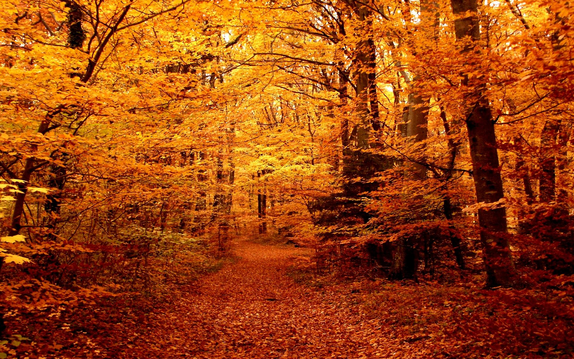 Autumn forest path