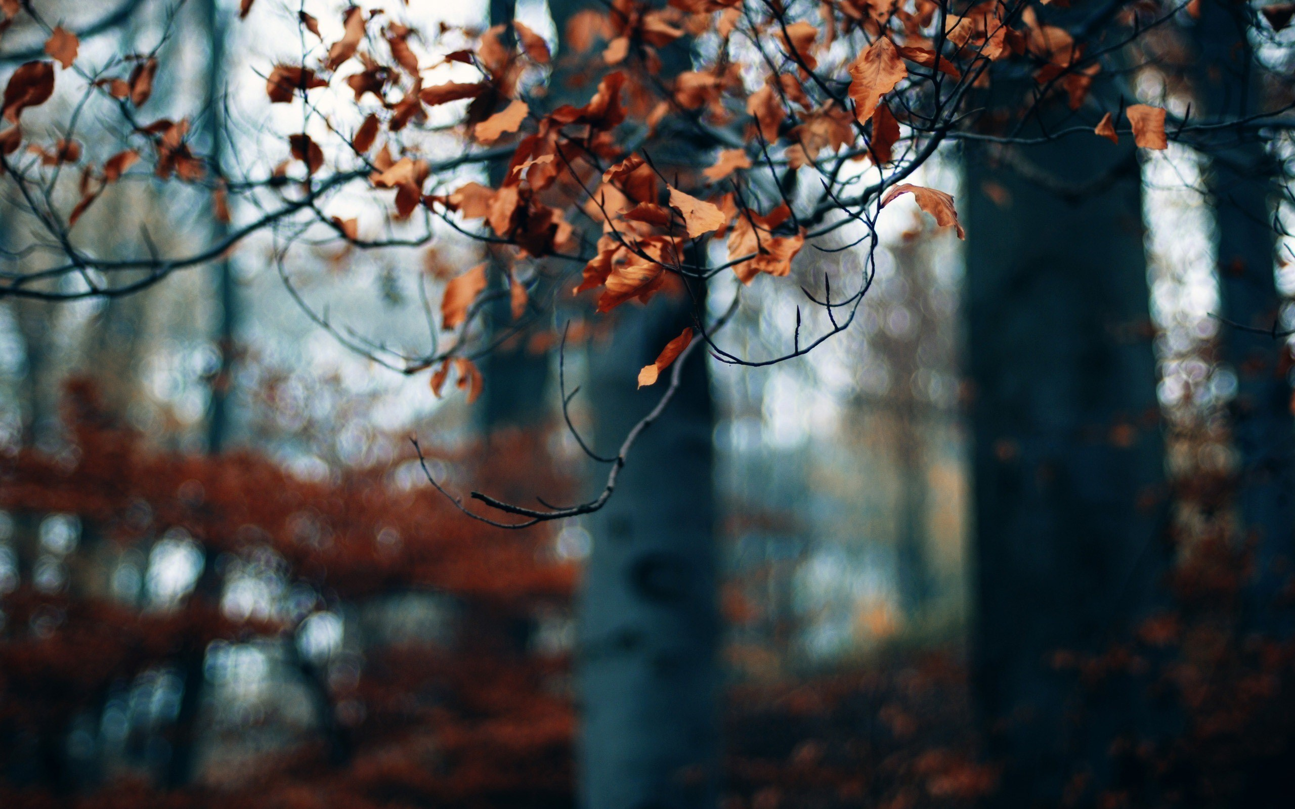 Autumn Forest Trees Branches Dry Leaves Photo