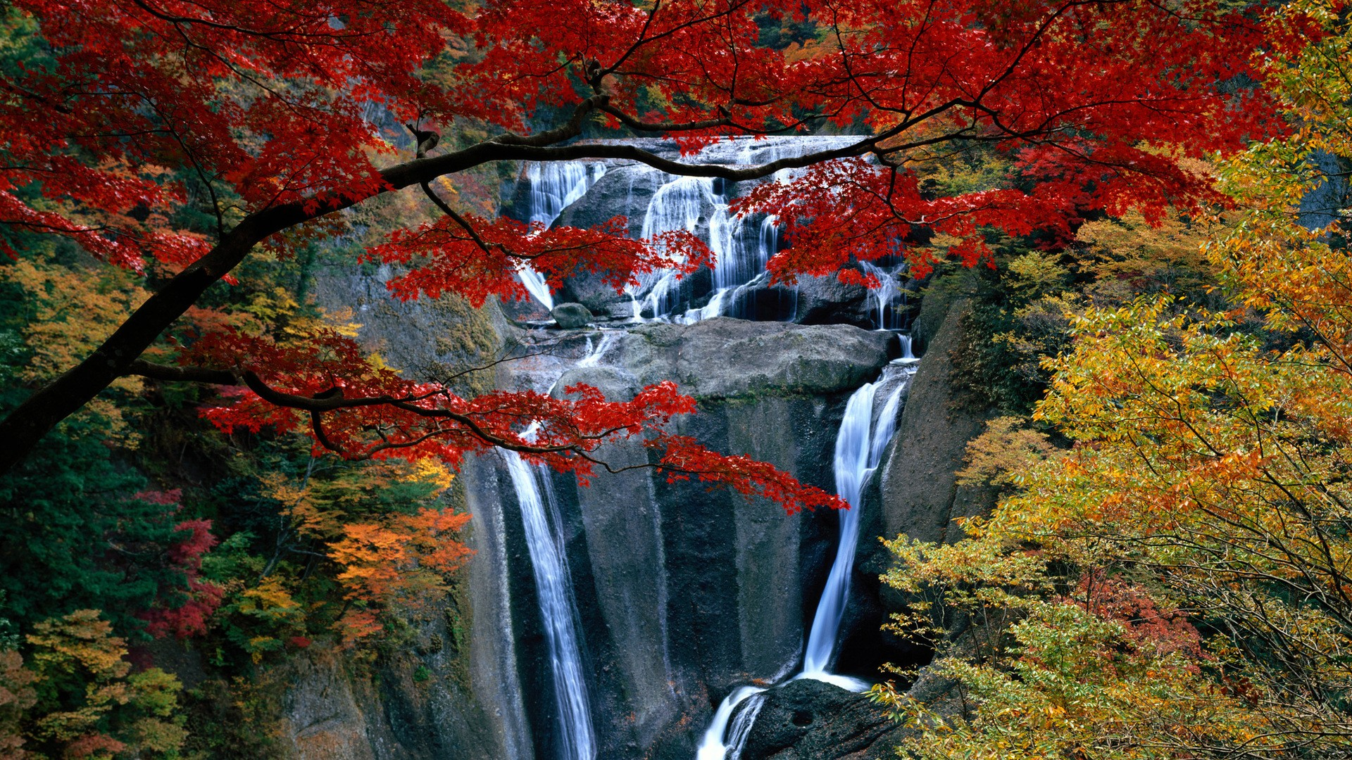 Autumn Leave Waterfall