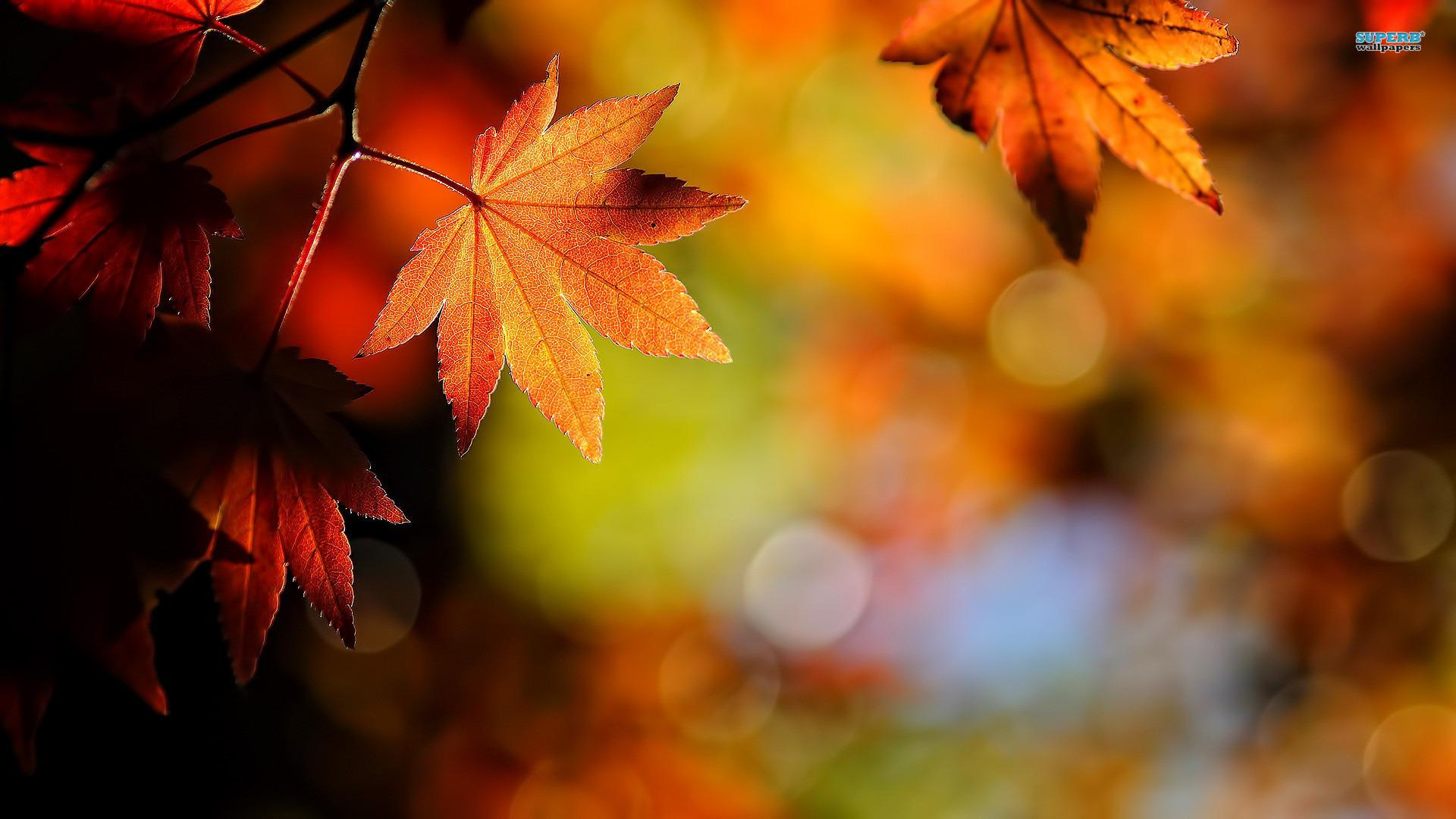 Autumn Leaves Hd Background Wallpaper 53 HD Wallpapers