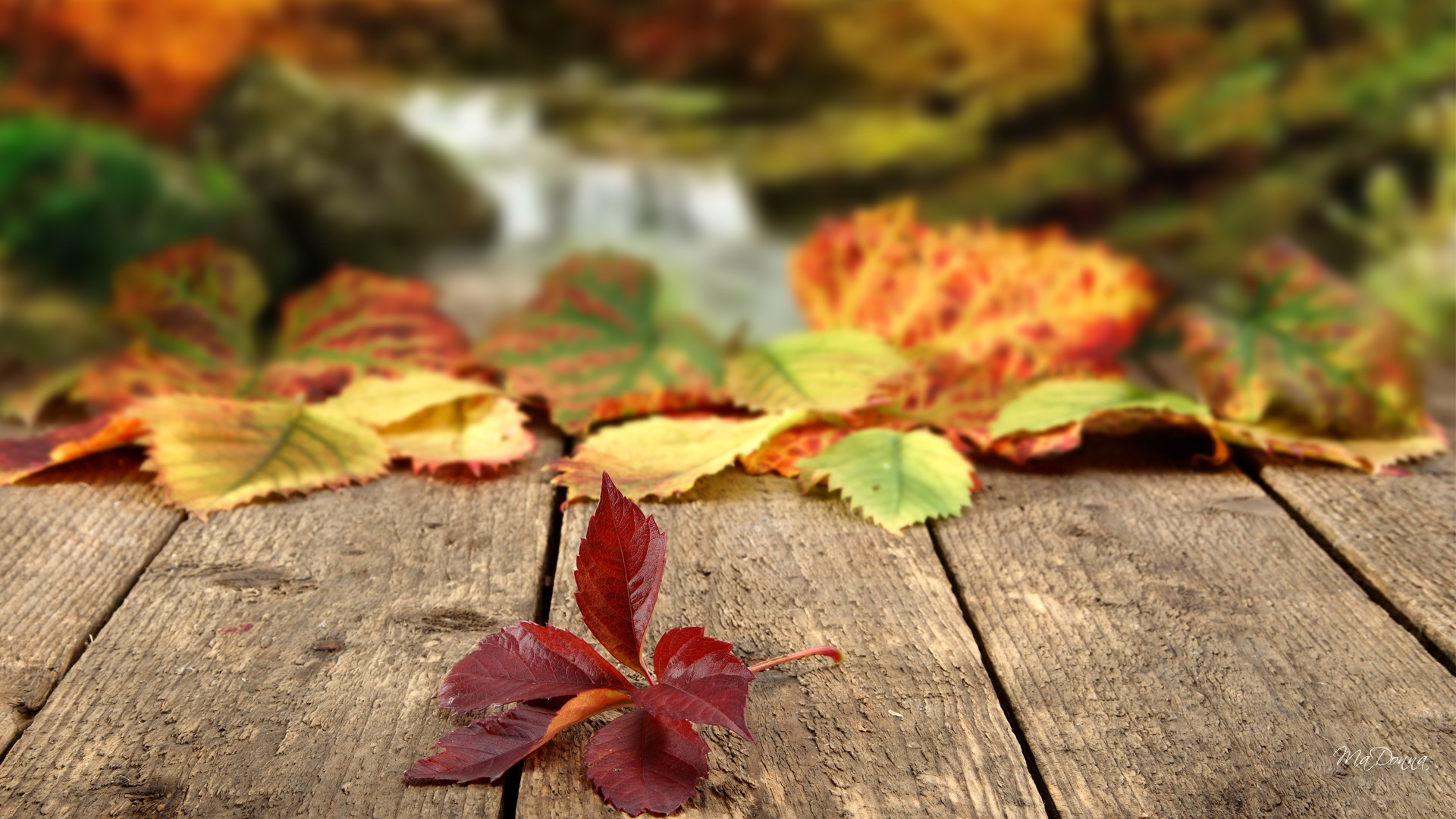Autumn Leaves Falling Wallpaper 1920x1080 29051