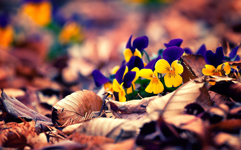 Autumn leaves flowers
