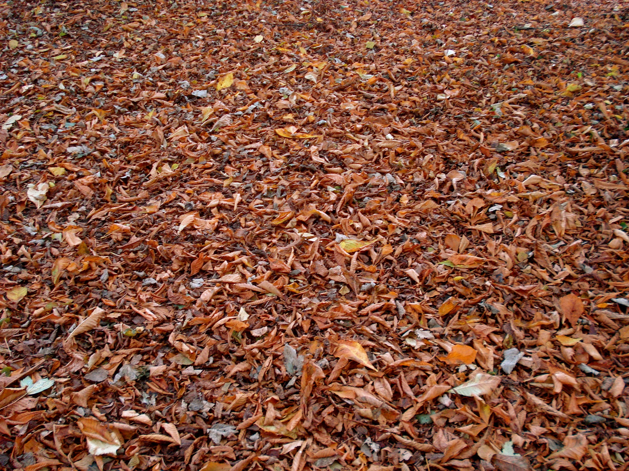 Autumn Leaves Ground