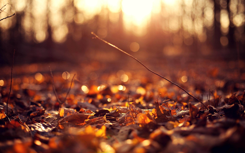Autumn leaves ground sunset