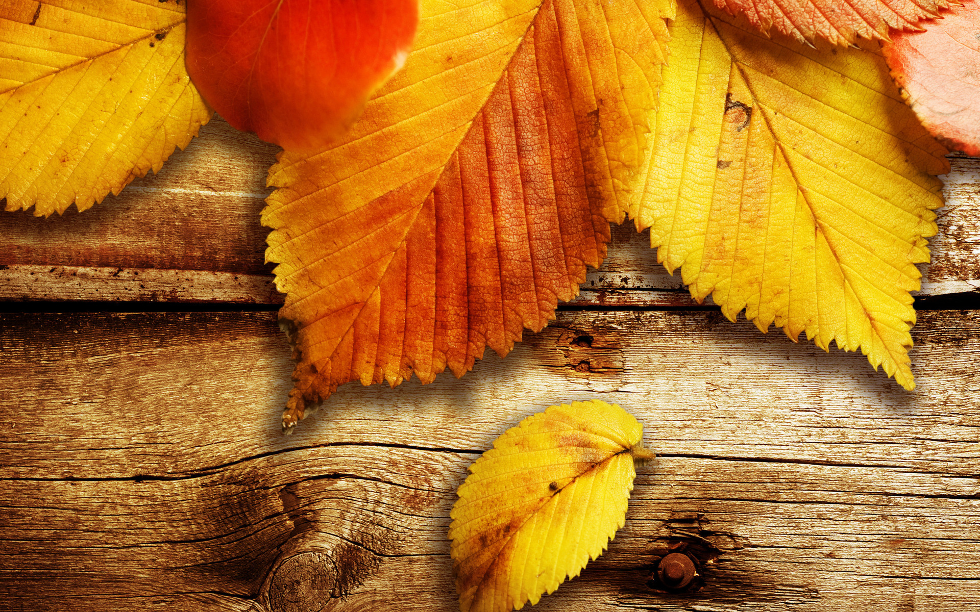 Autumn Leaf Wallpaper6