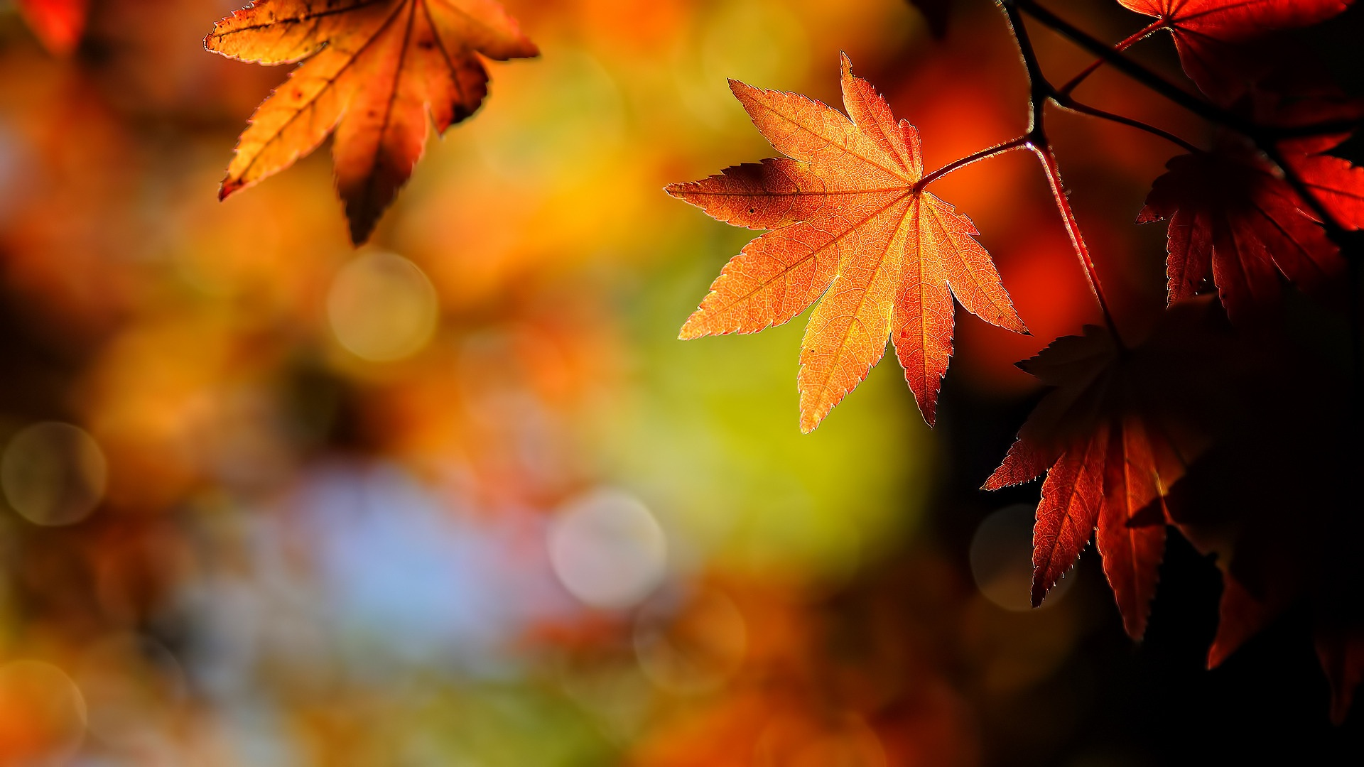 Autumn leaves nature wallpaper 1920x1080.