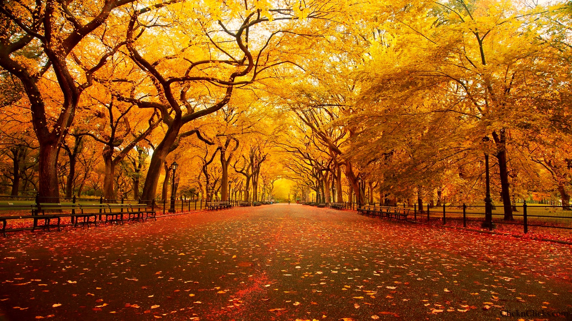 Autumn New York