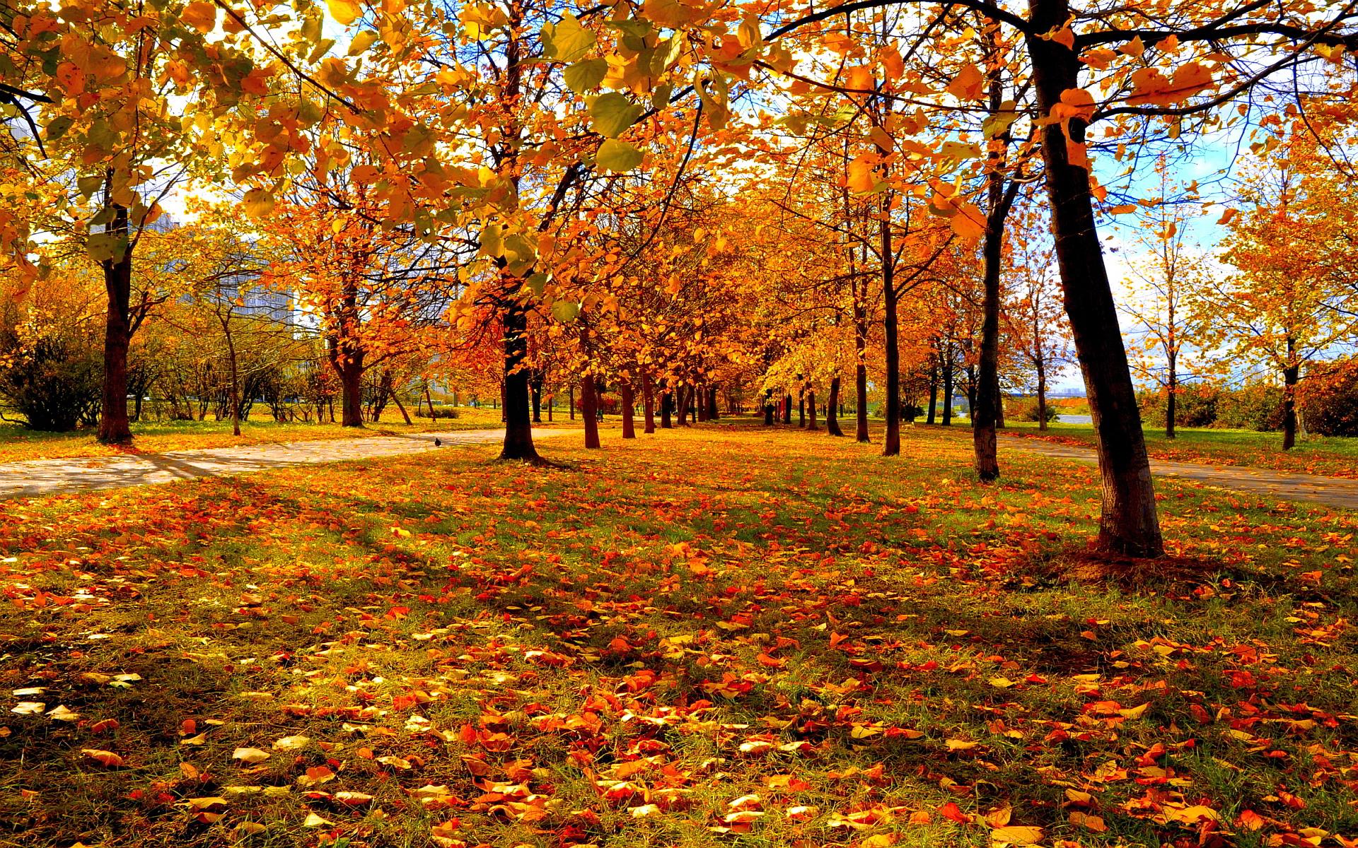 Autumn park leaves sunset