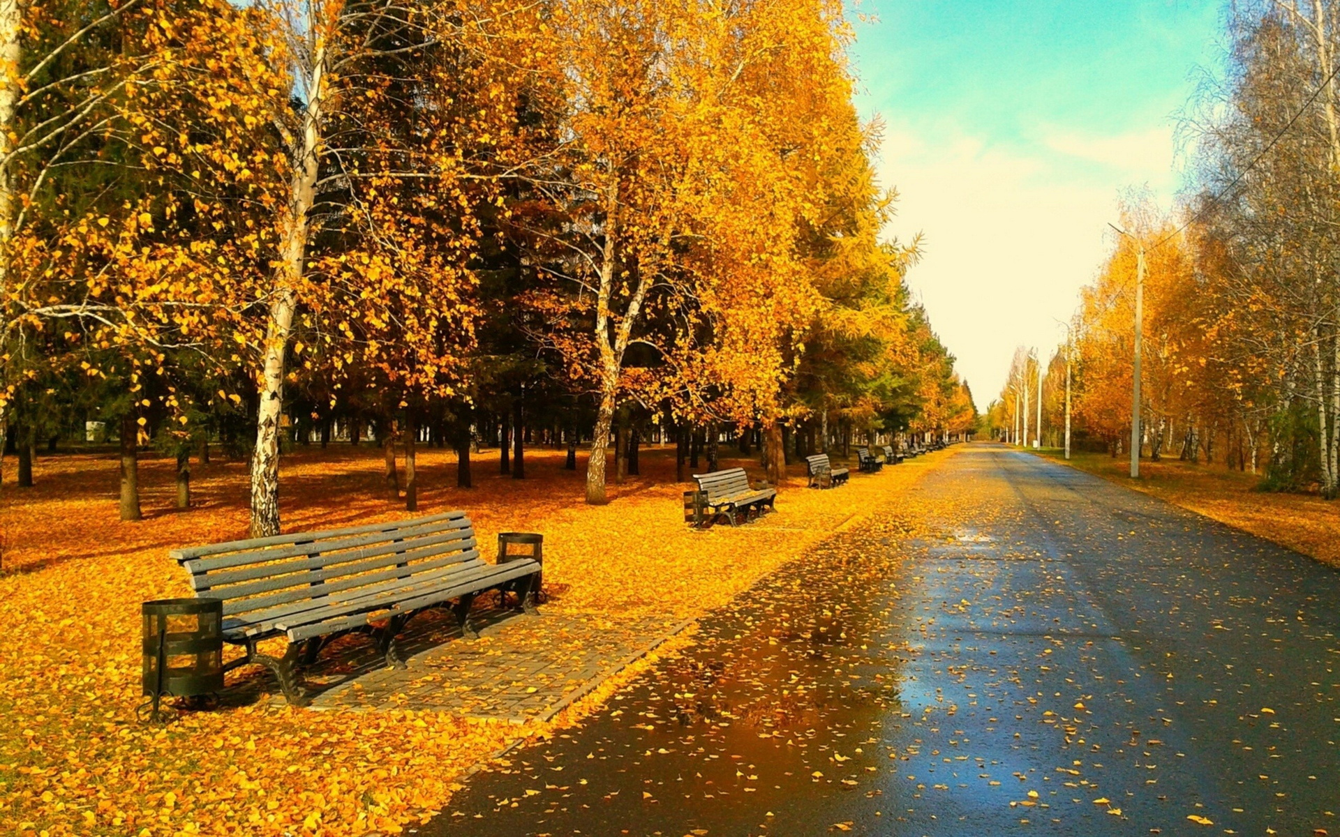 Autumn park road