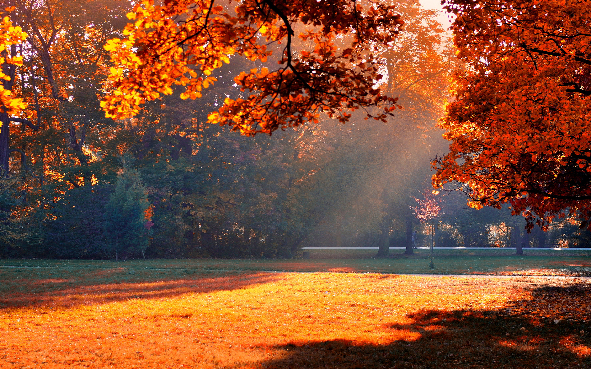 Autumn park sunshine