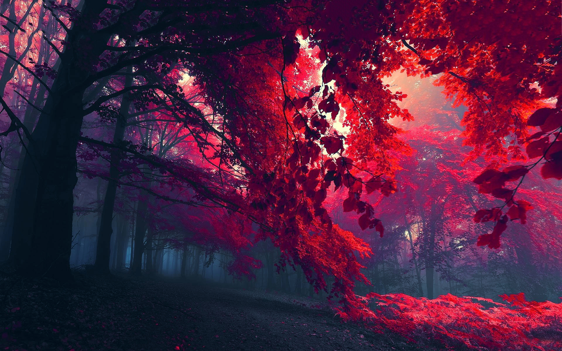 Autumn red foliage
