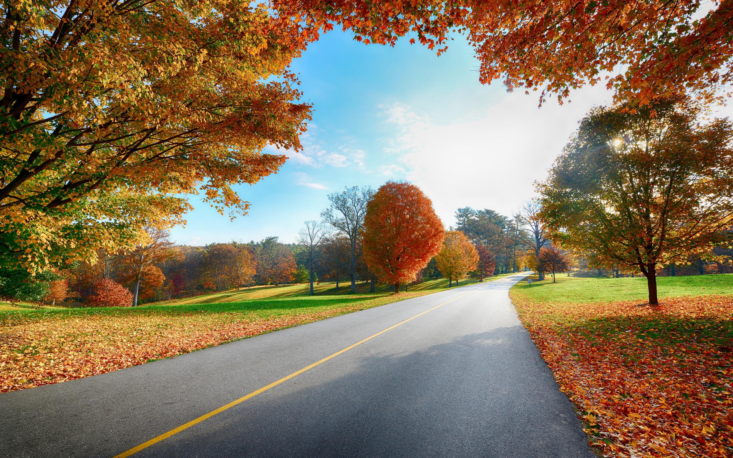 Autumn road nature scenery