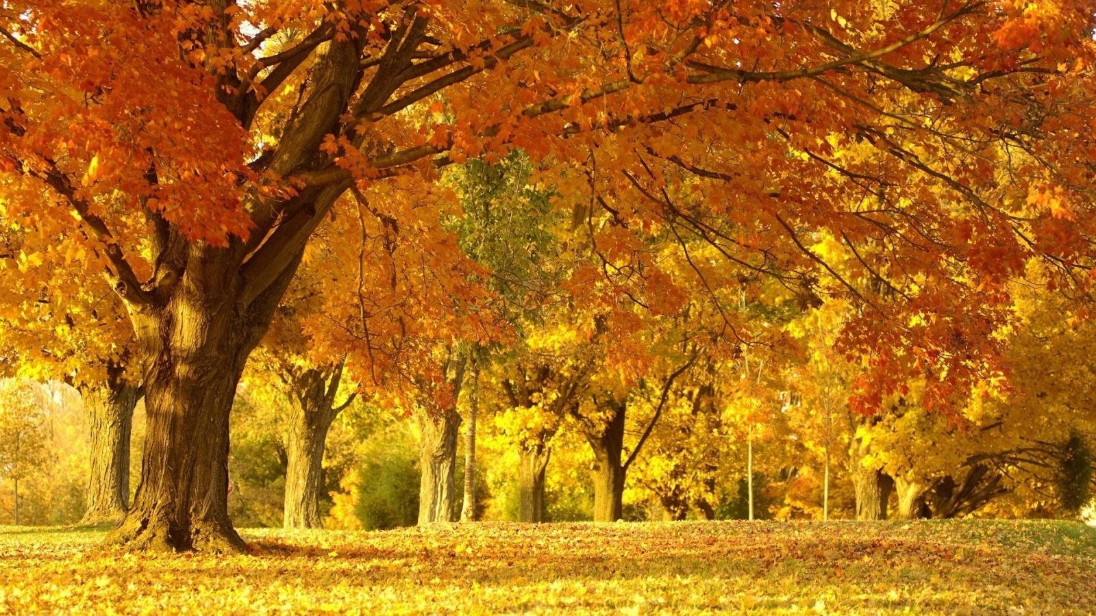 Autumn Scenery Wallpaper 1600x900 26726
