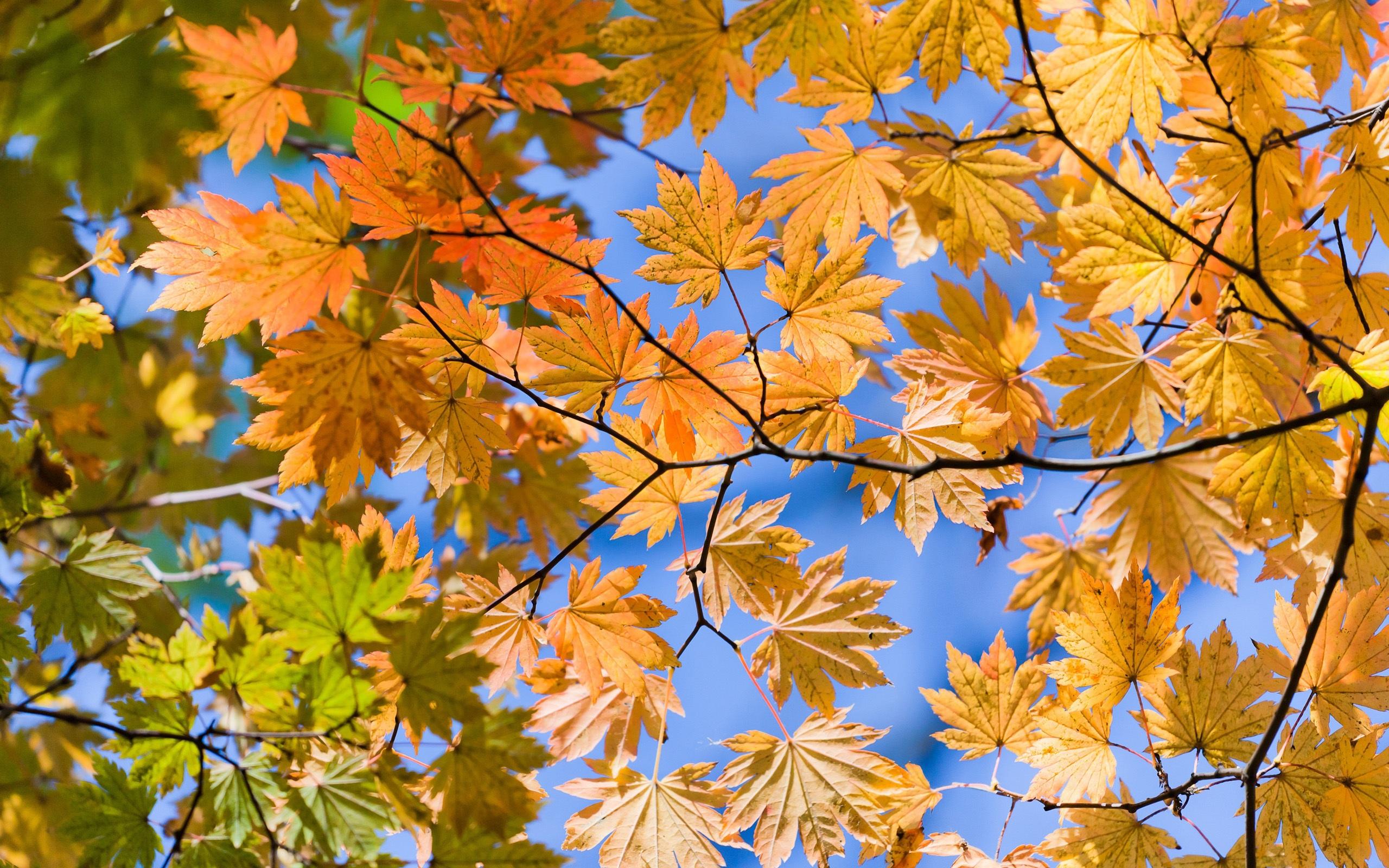 Autumn Sky Leaves