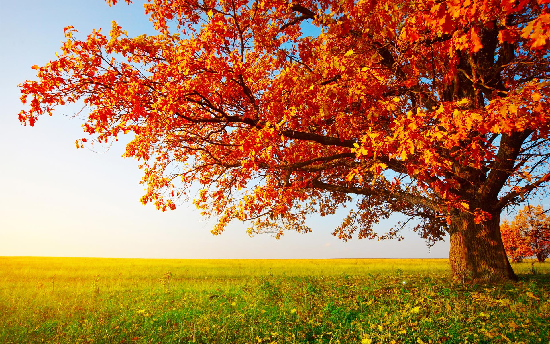 Autumn Trees Photography Hd Images 3 HD Wallpapers
