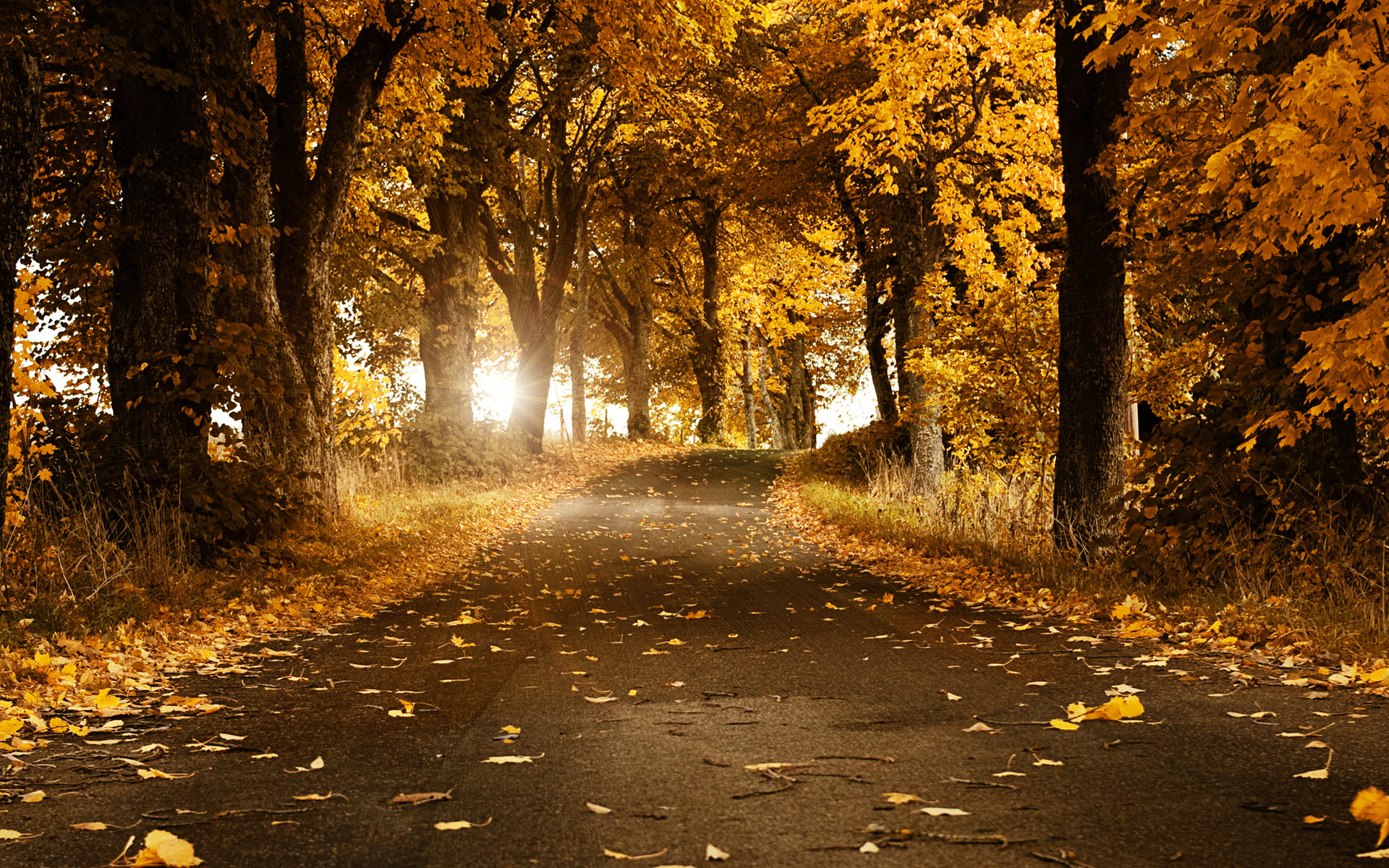 Trees Park Leaf Fall Autumn Foliage covered park wallpaper | Wallpaper Wide HD
