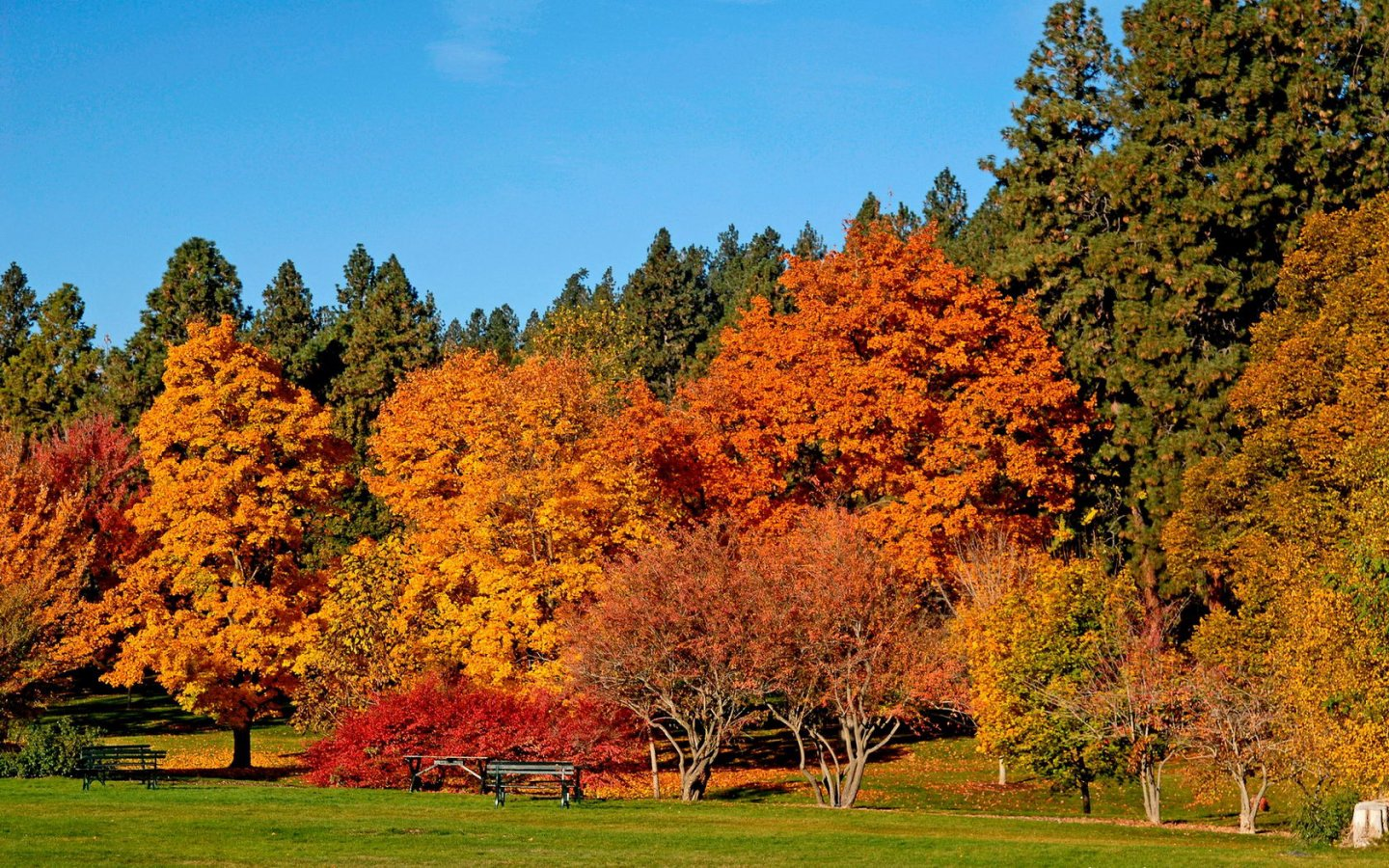 Images Trees Autumn Pictures 5 HD Wallpapers