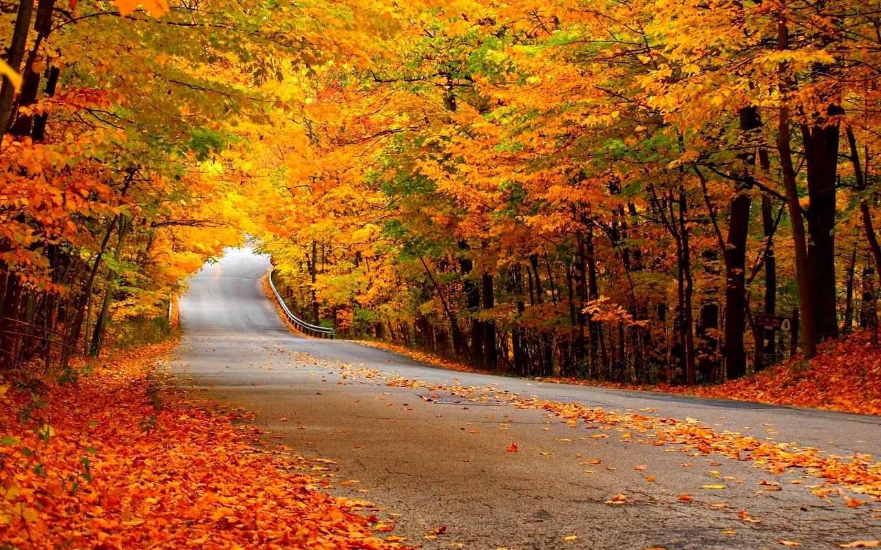 Autumn Autumn Wallpaper