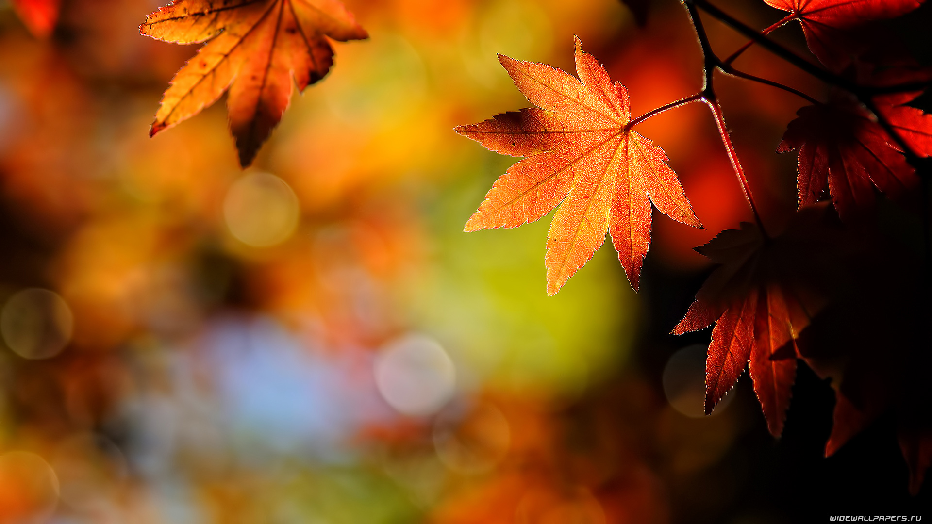 Abstract Awesome Leaves Autumn Wallpaper Autumn Wallpaper