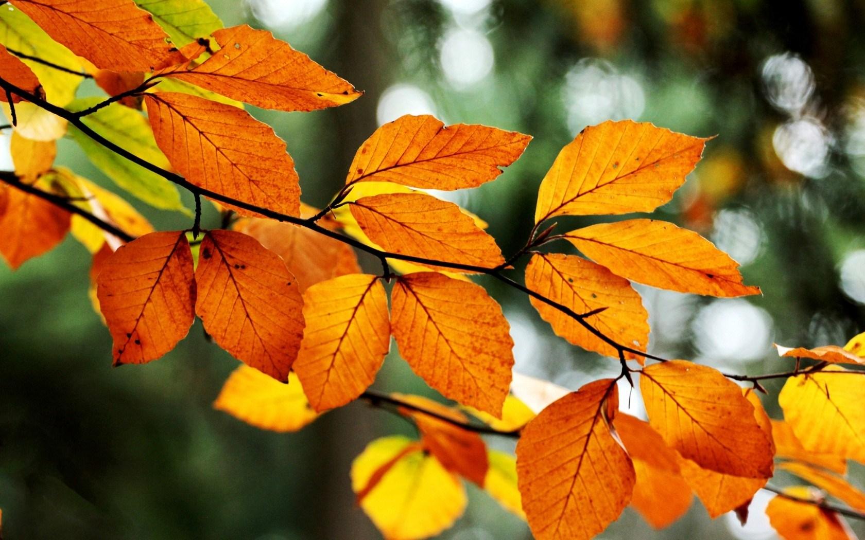 Leaves Orange Yellow Branch Tree Fall Autumn Nature
