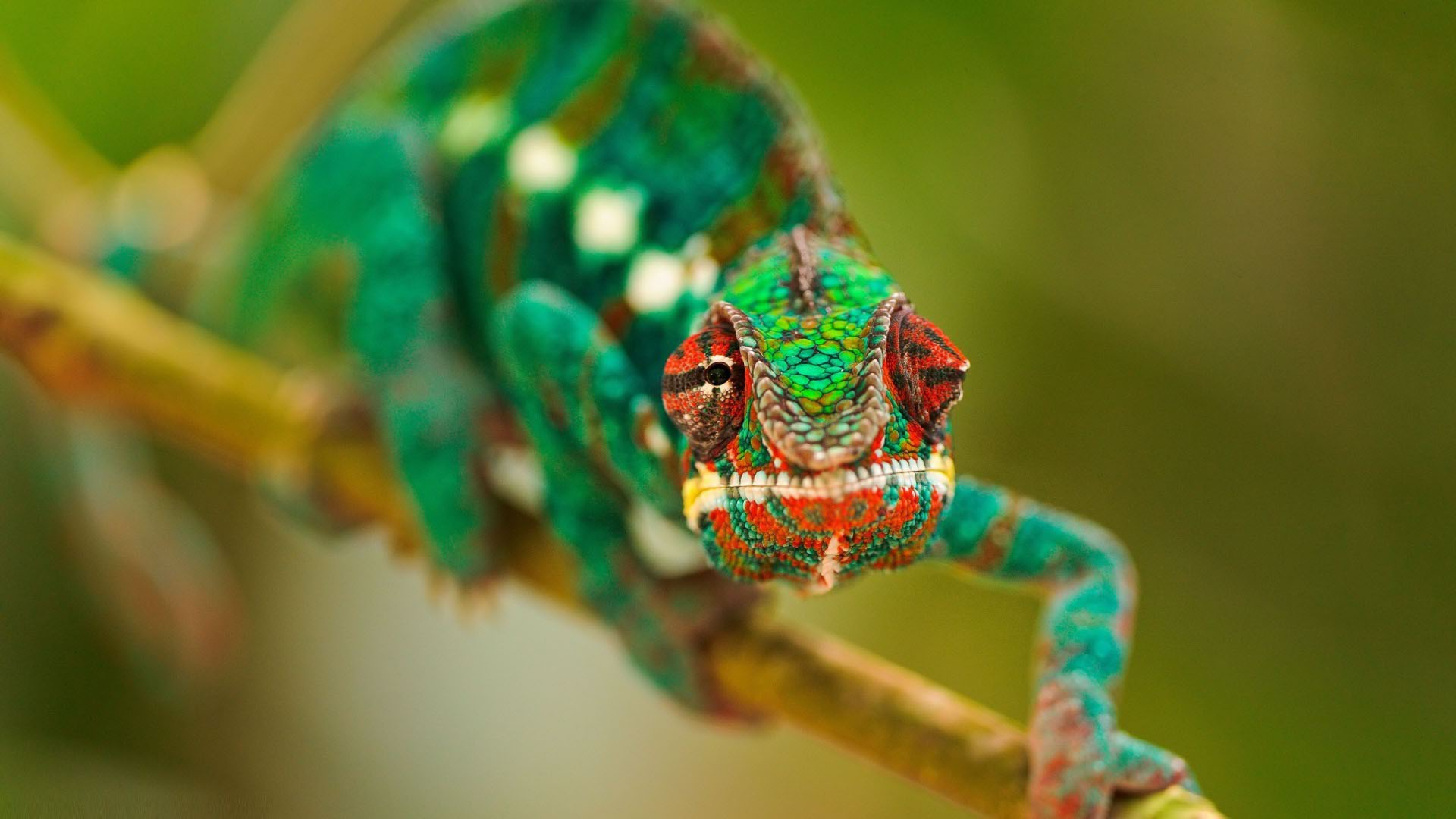 Awesome animal macro wallpaper 1920x1080 11440 - Animal 1920x1080 ...