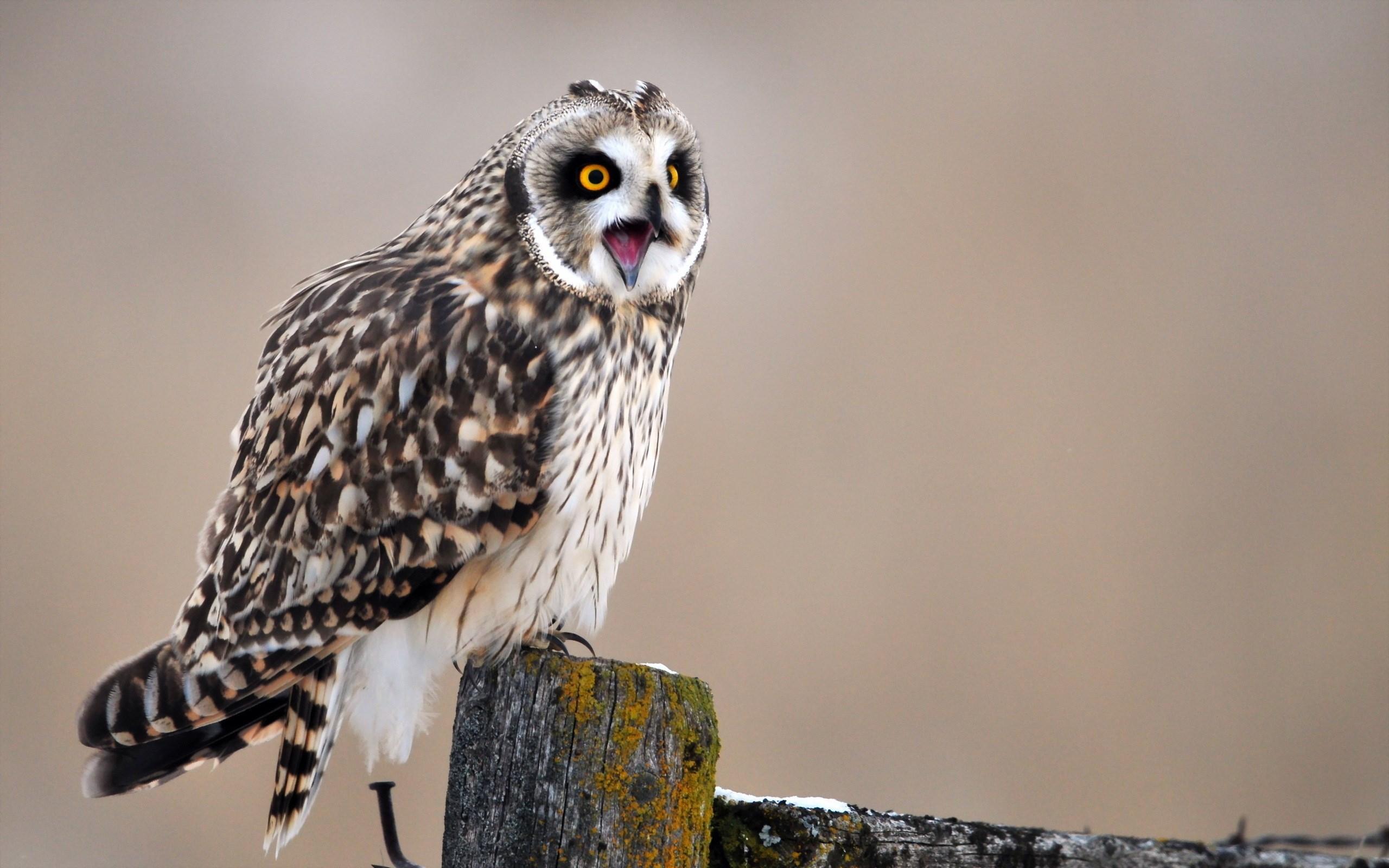 Awesome Bird Owl