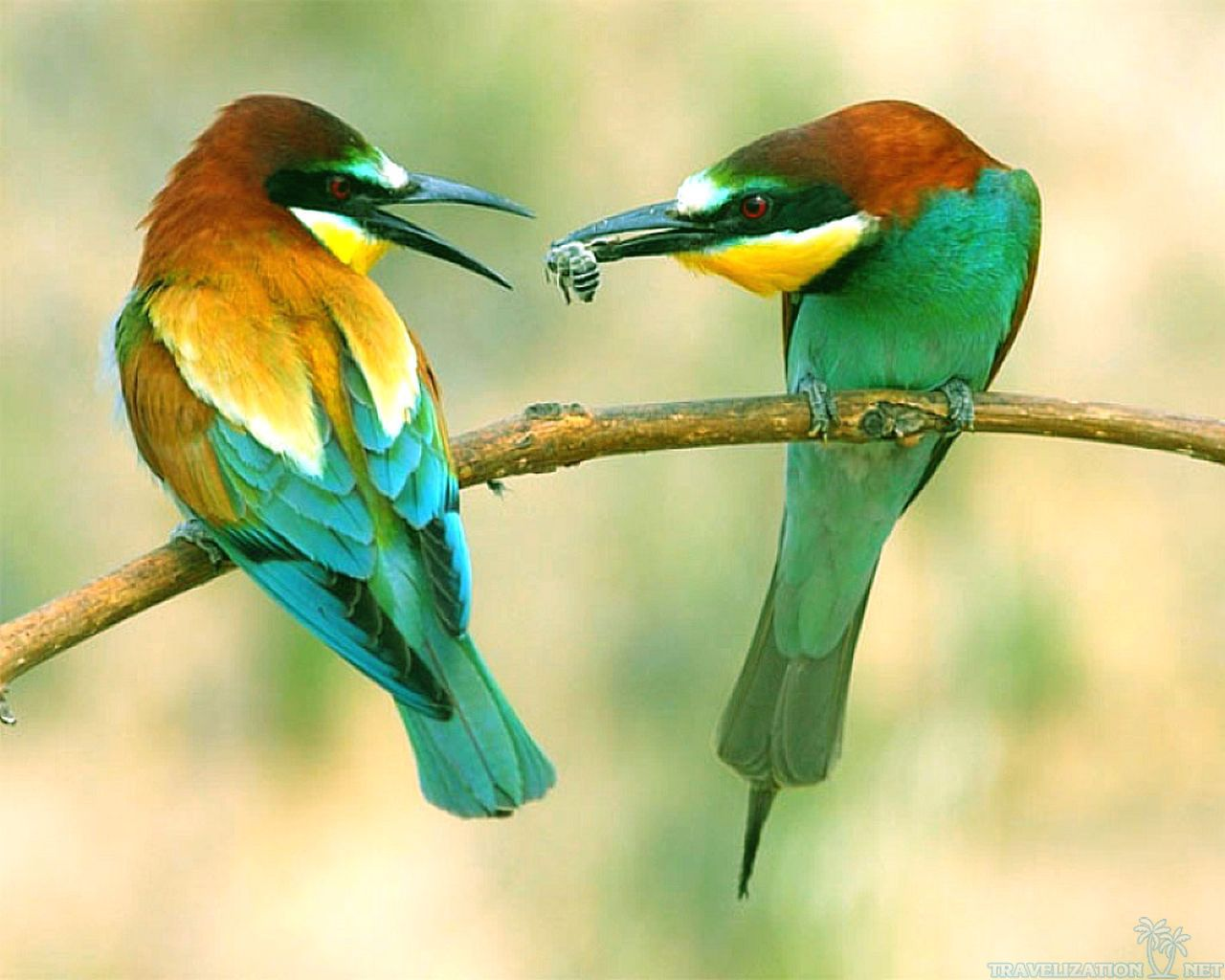 Awesome Colorful Birds Wallpapers