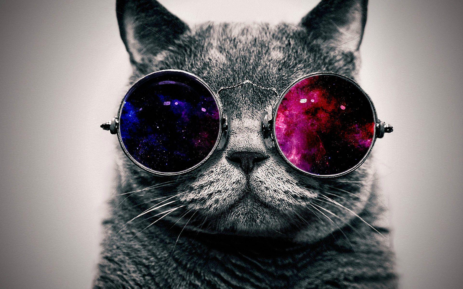 Cool Cat Desktop Wallpaper