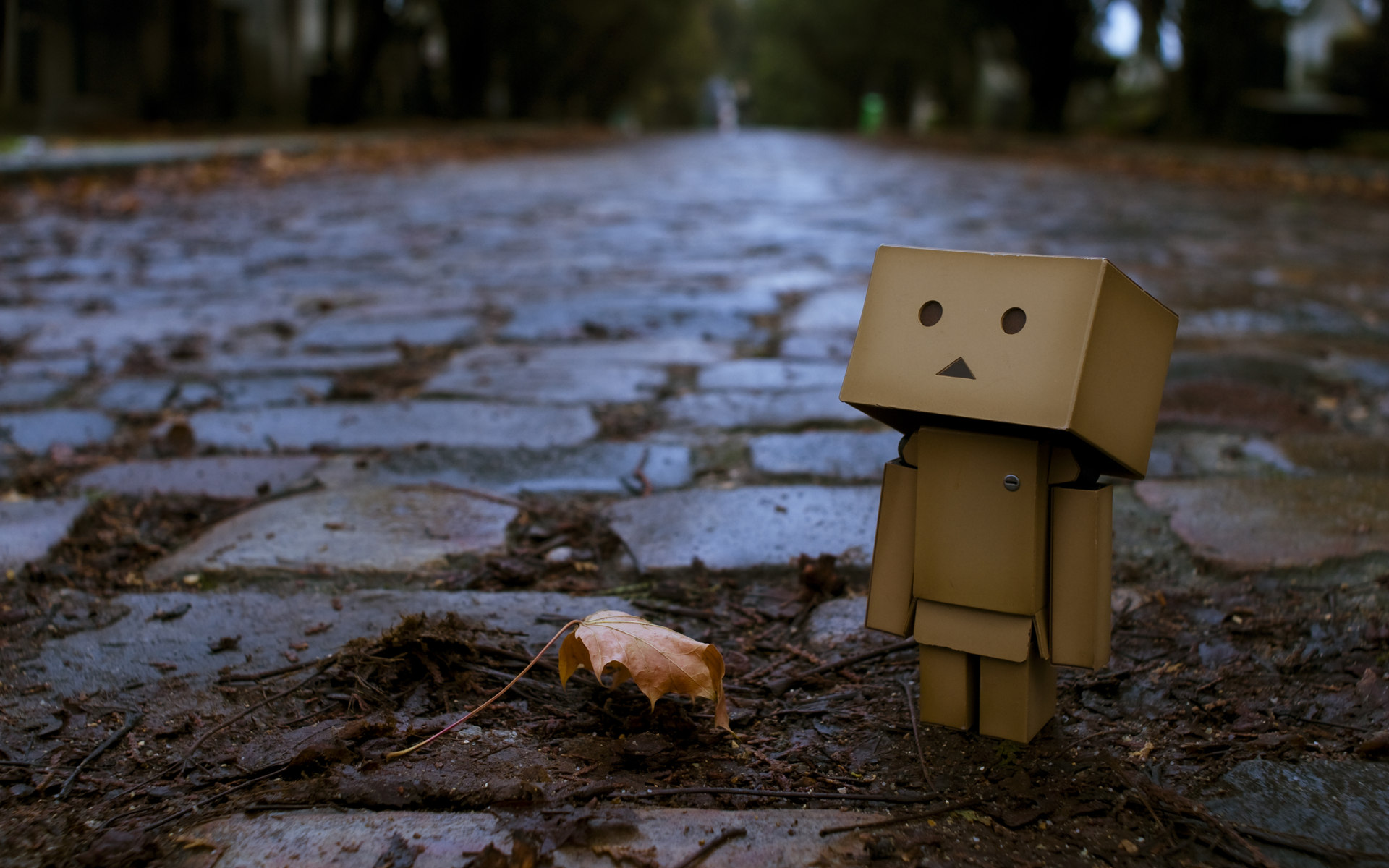 Awesome Danbo Wallpaper