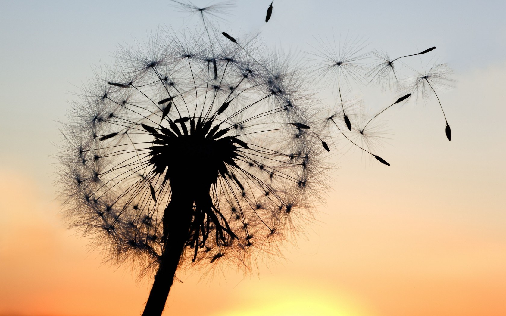 Awesome Dandelion Wallpaper