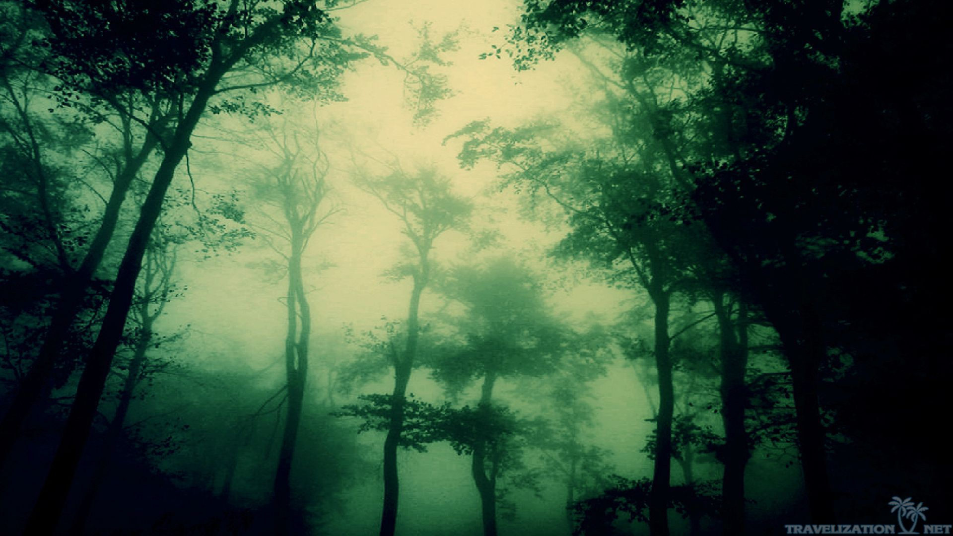 Awesome Dark Forest Wallpapers Travelization