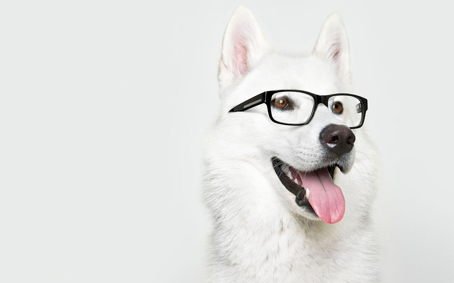 Awesome Dog with Glasses Wallpaper