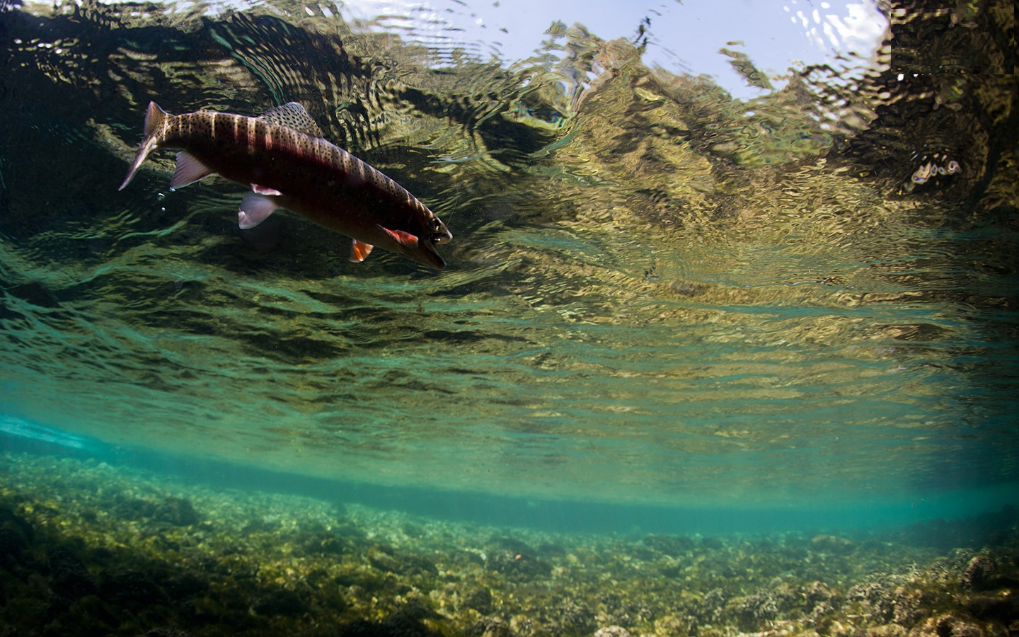 Awesome Fly Fishing Wallpaper