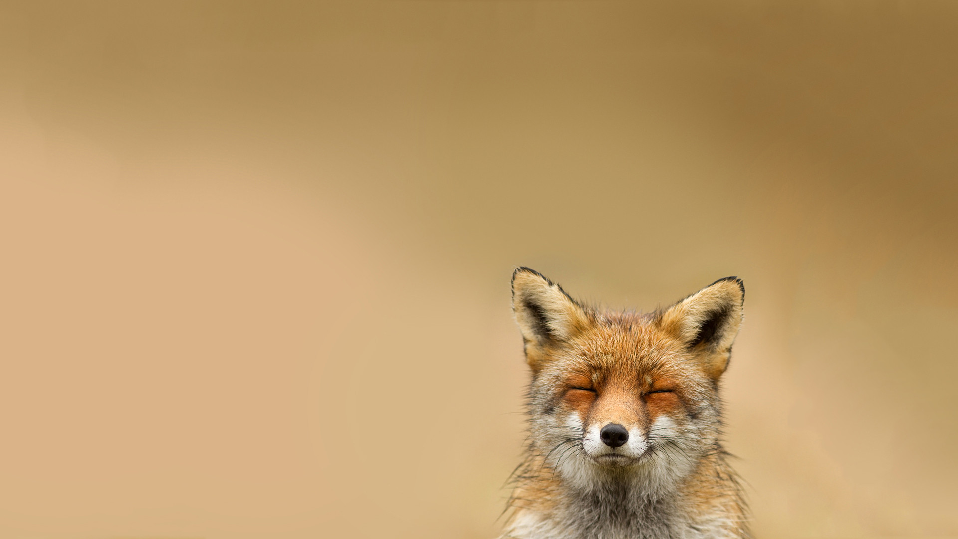 Awesome Fox Wallpaper
