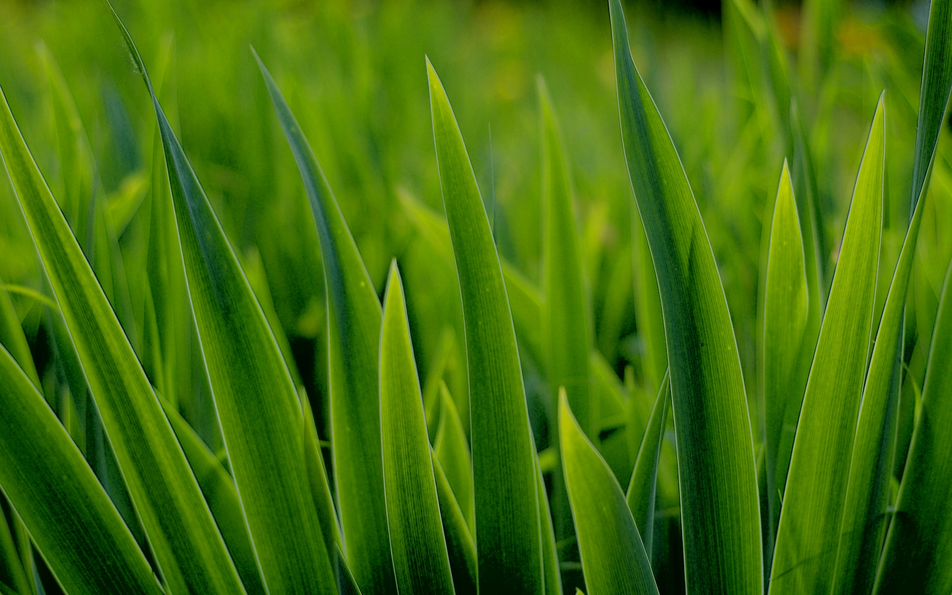 Awesome Grass Background
