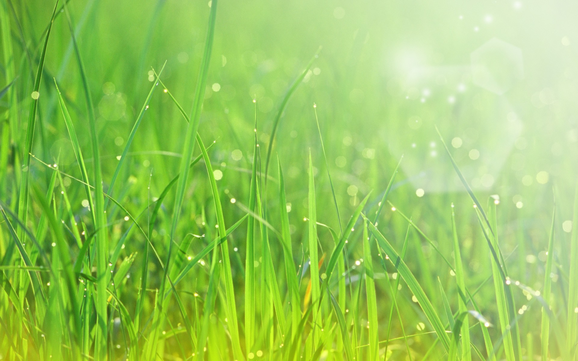 Awesome Grass Bokeh