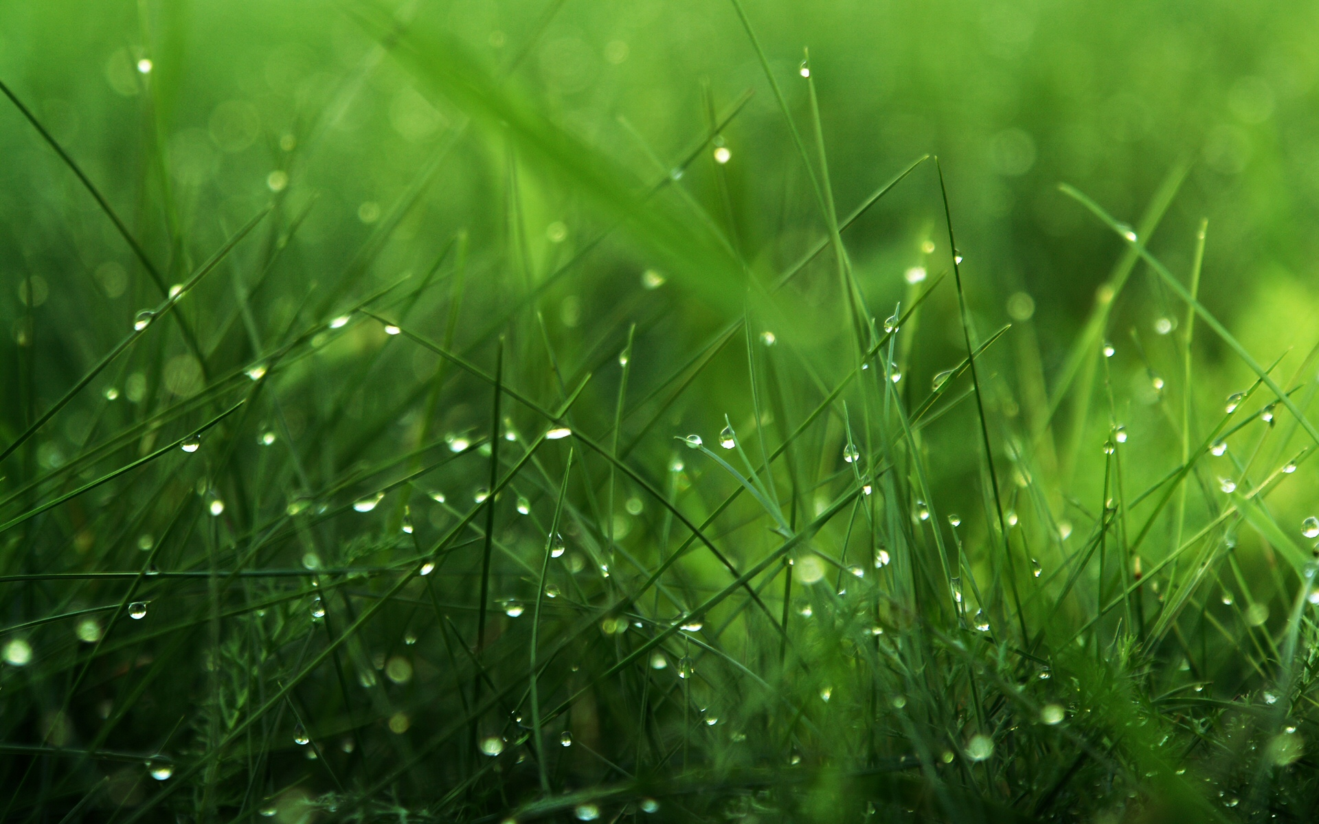 Awesome Grass Wallpaper