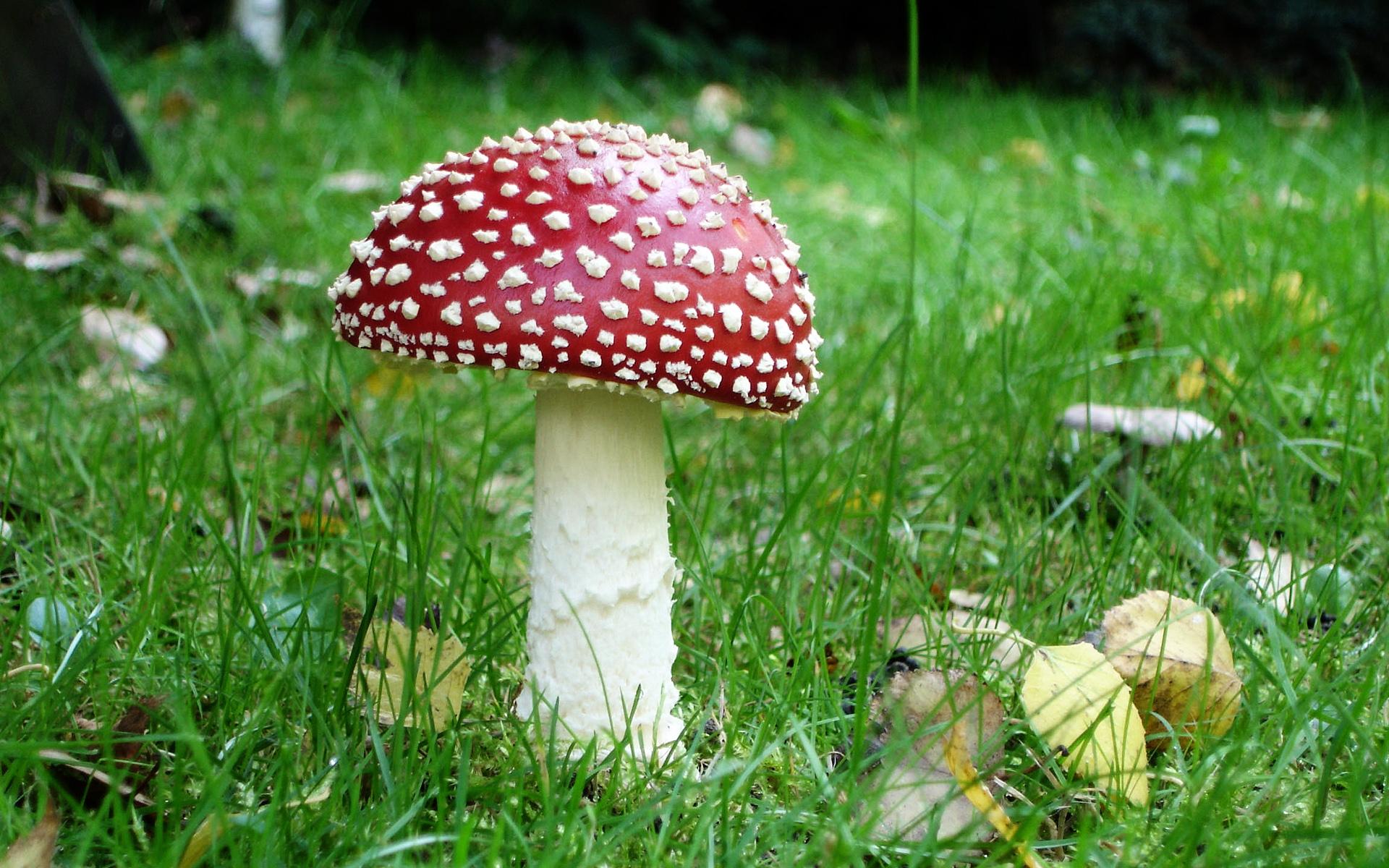 Awesome Mushroom Wallpaper 12355