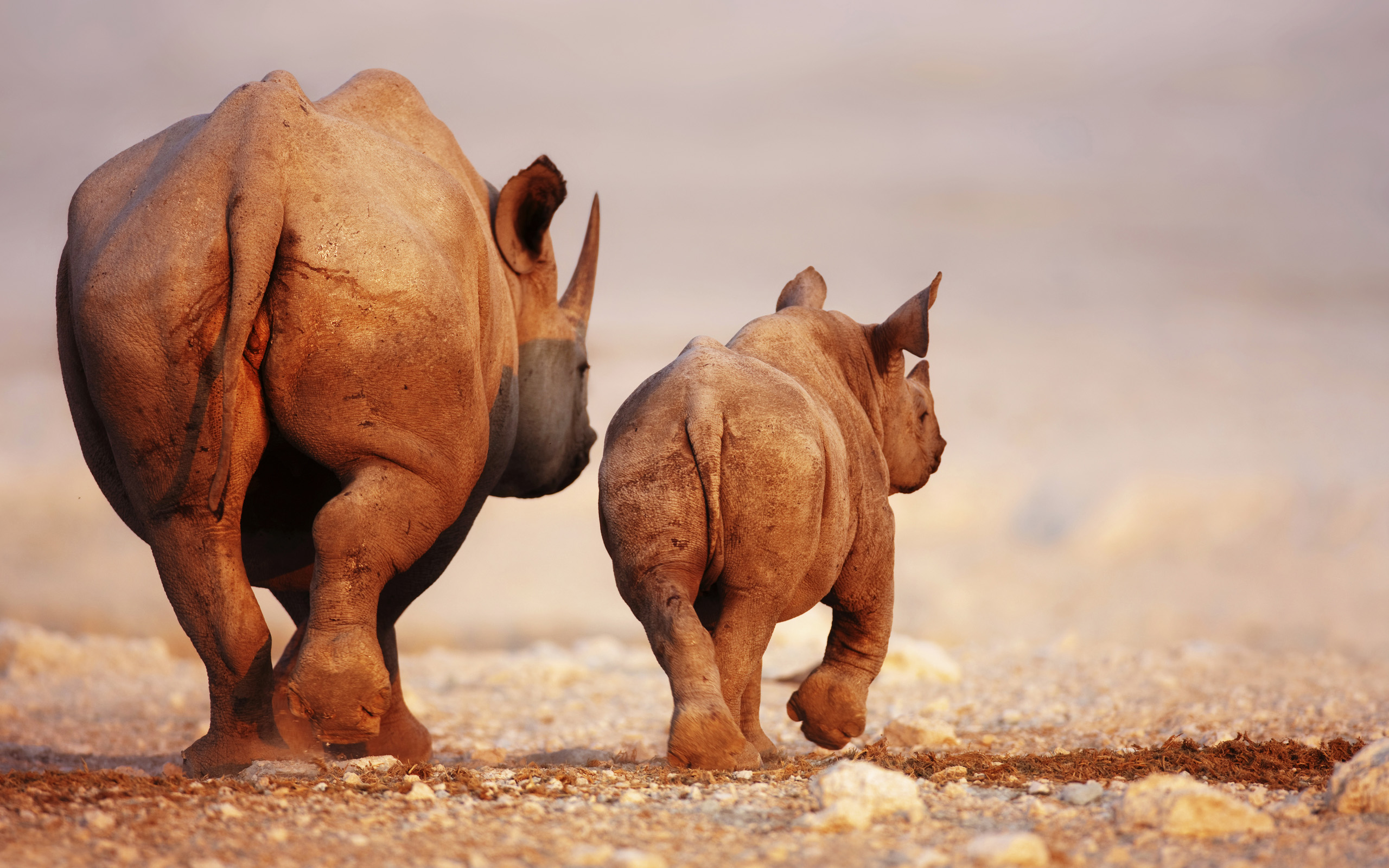 Awesome Rhinoceros Wallpaper Android 77 Wallpaper