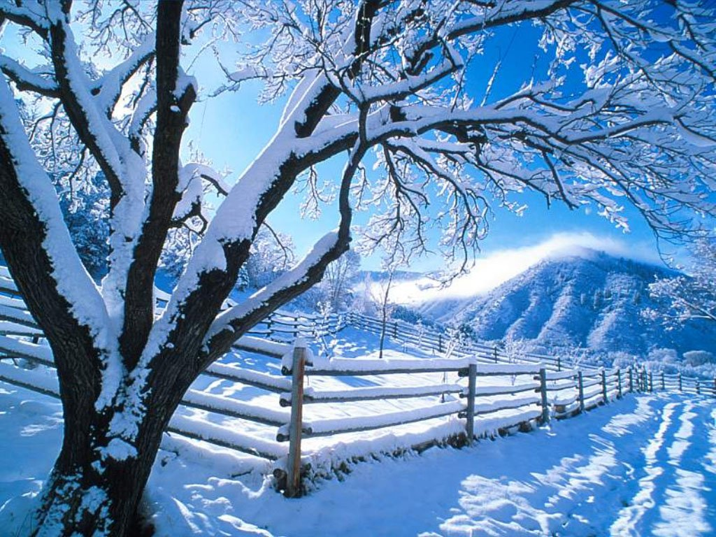 Awesome Snow Trees Background