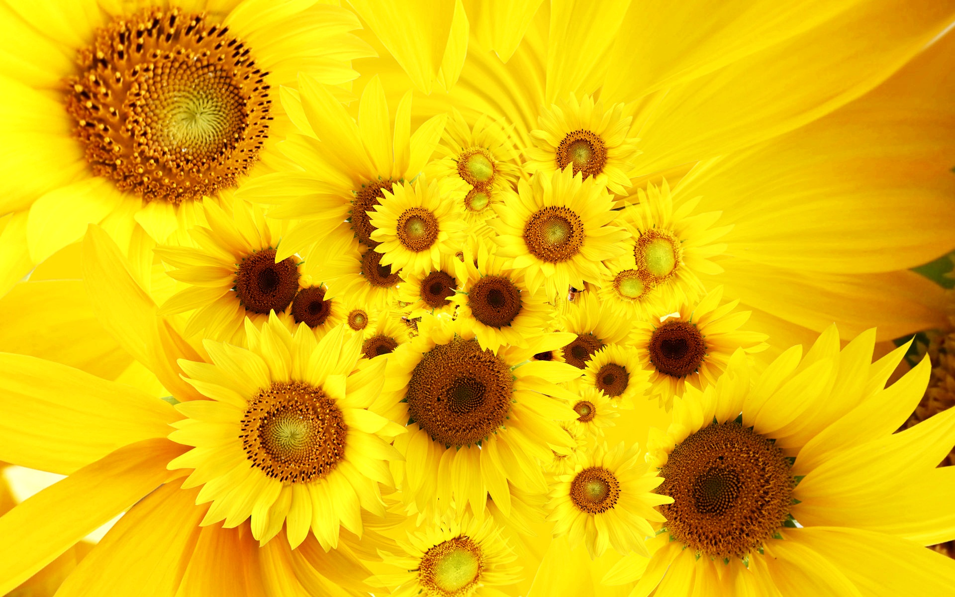 Awesome Sunflower Wallpaper