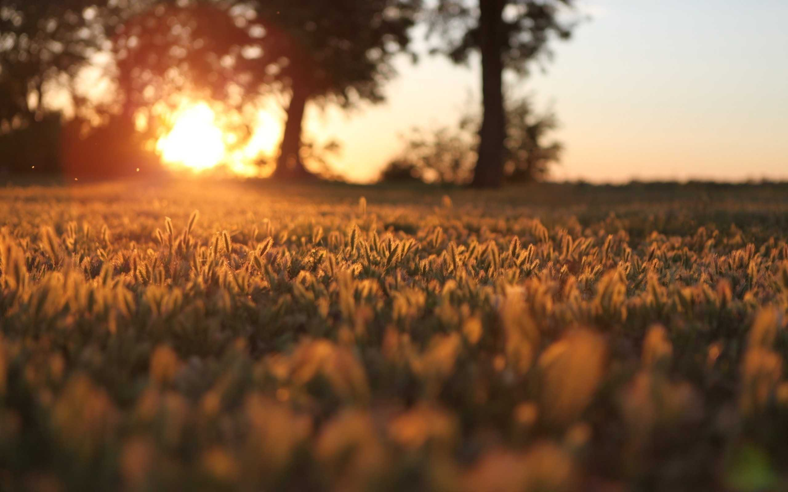 Awesome Sunlight Wallpaper 6117