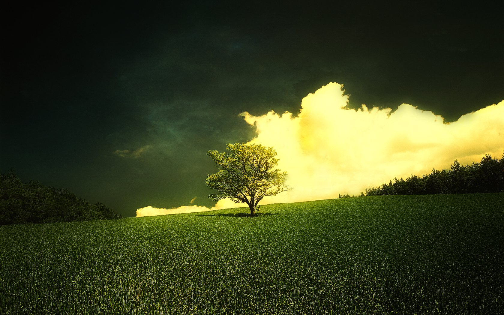 Awesome Trees Wallpaper