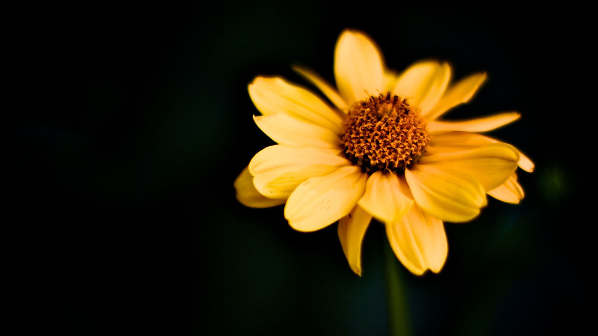 Awesome Yellow Macro Wallpaper