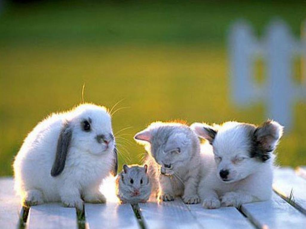 Wallpapers for Gt Background Images Baby Animals