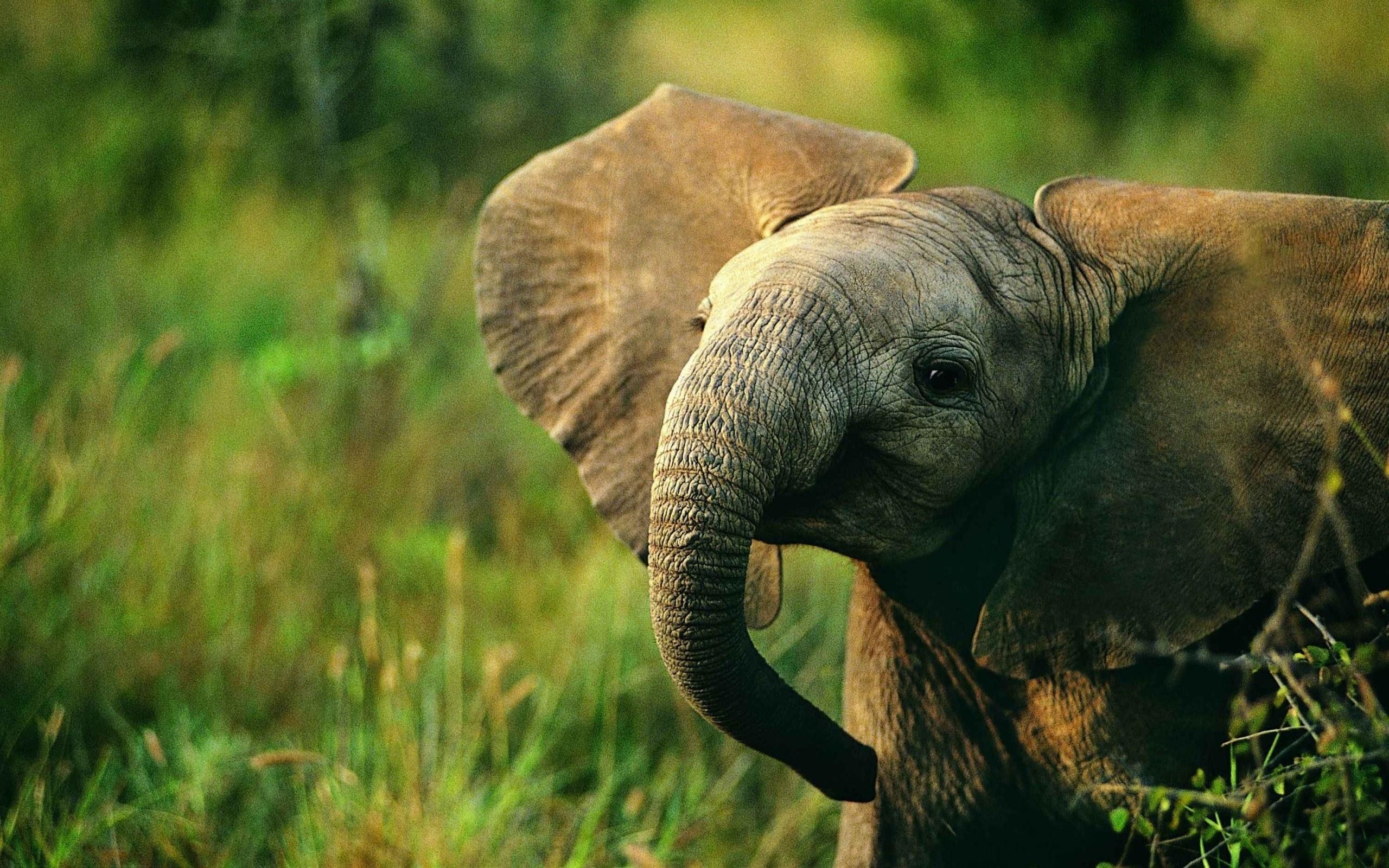 Baby Elephant Nature