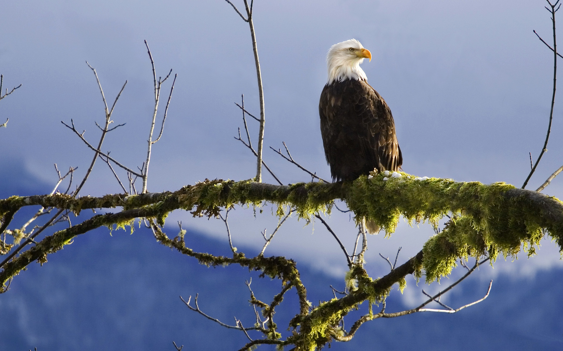 Bald Eagle Branch