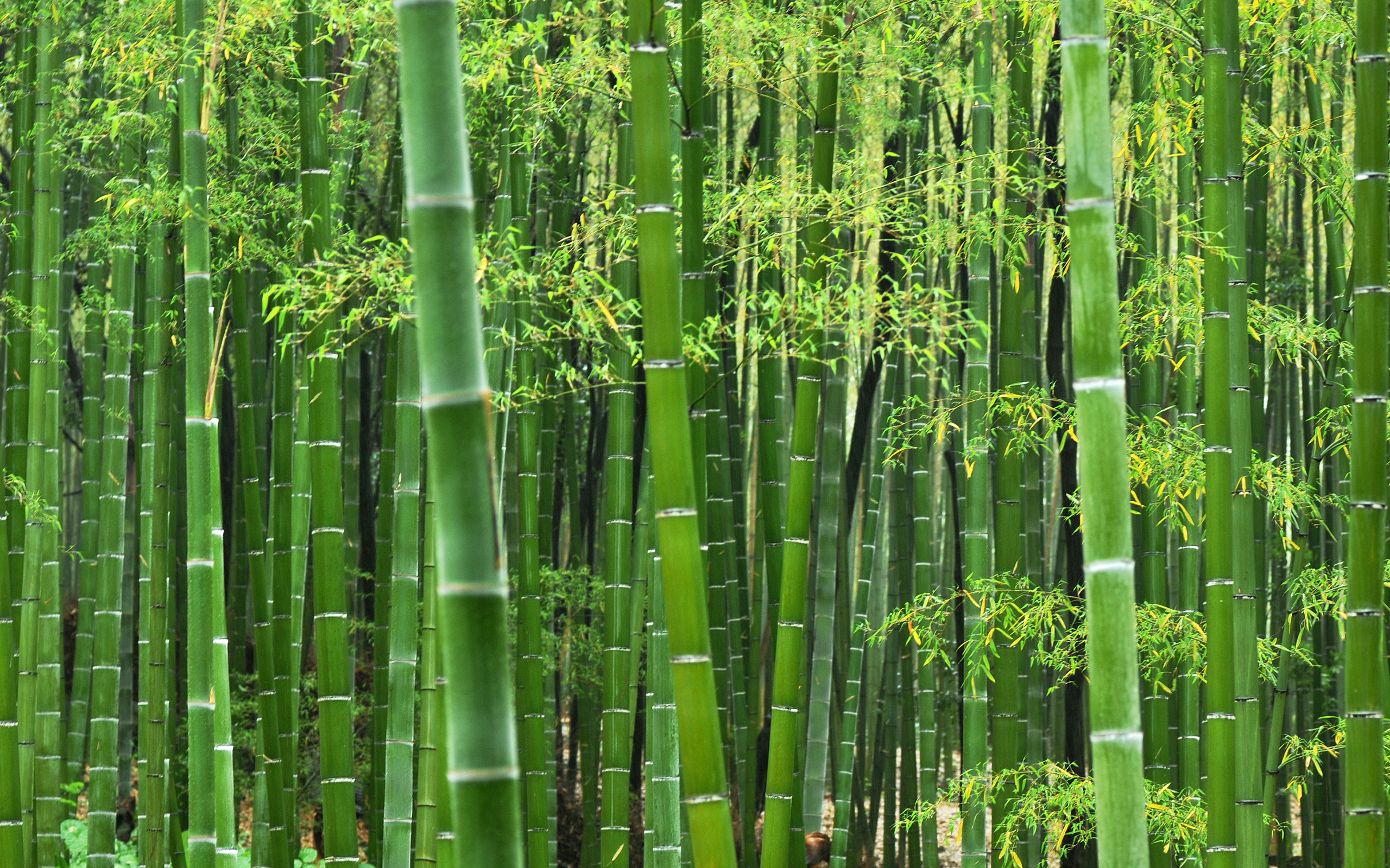 Sustainability and beauty combined – the strength of bamboo