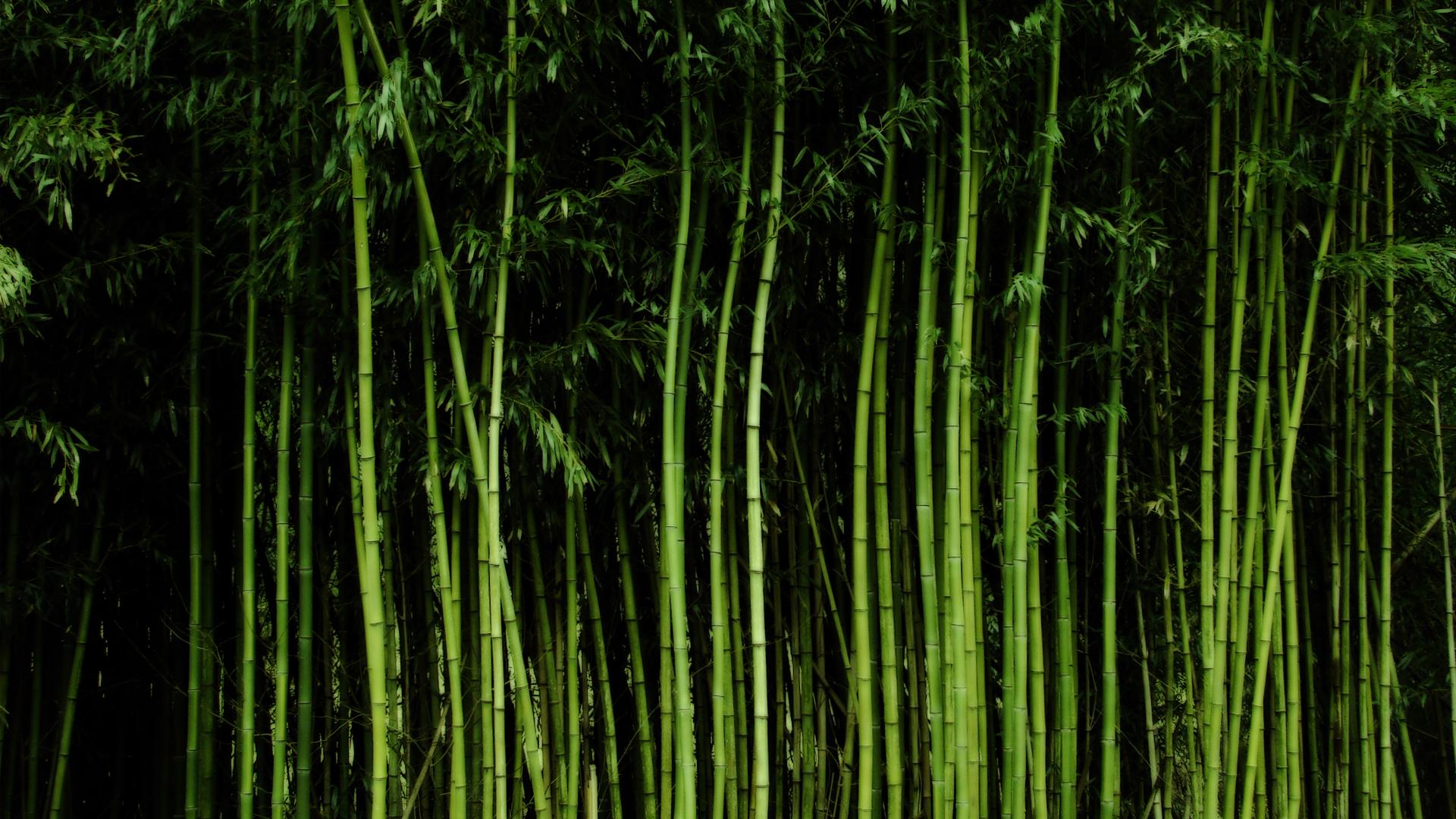 Bamboo Wallpaper by LauraMizvaria Bamboo Wallpaper by LauraMizvaria