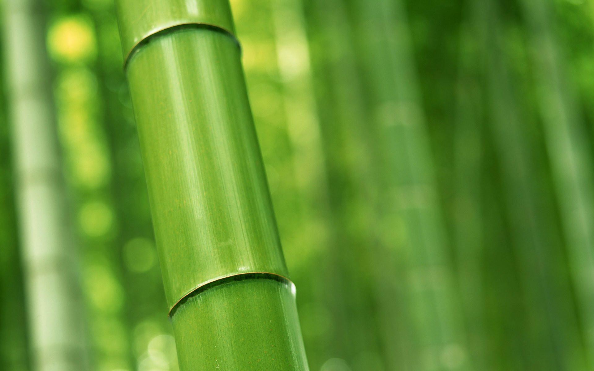 ... Bamboo Wallpaper ...